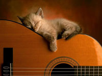 cat-guitar-sm